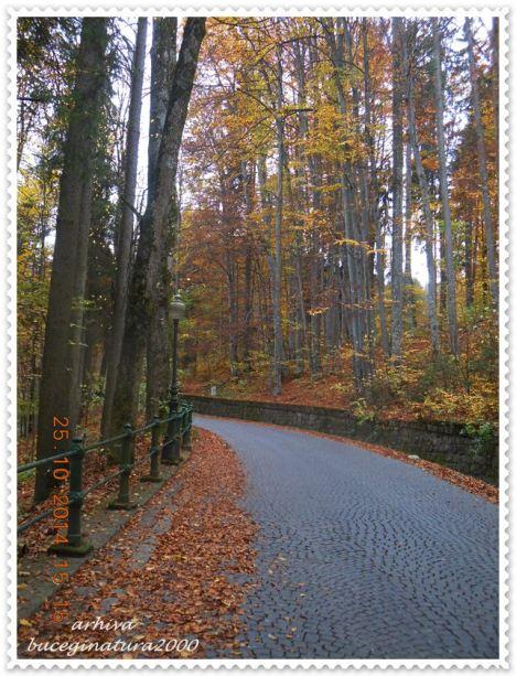 Drumul spre Peles